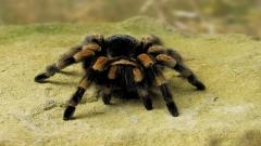Spider Widescreen Wallpaper 49665