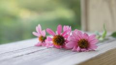 Windowsill Flowers Computer Wallpaper 49671