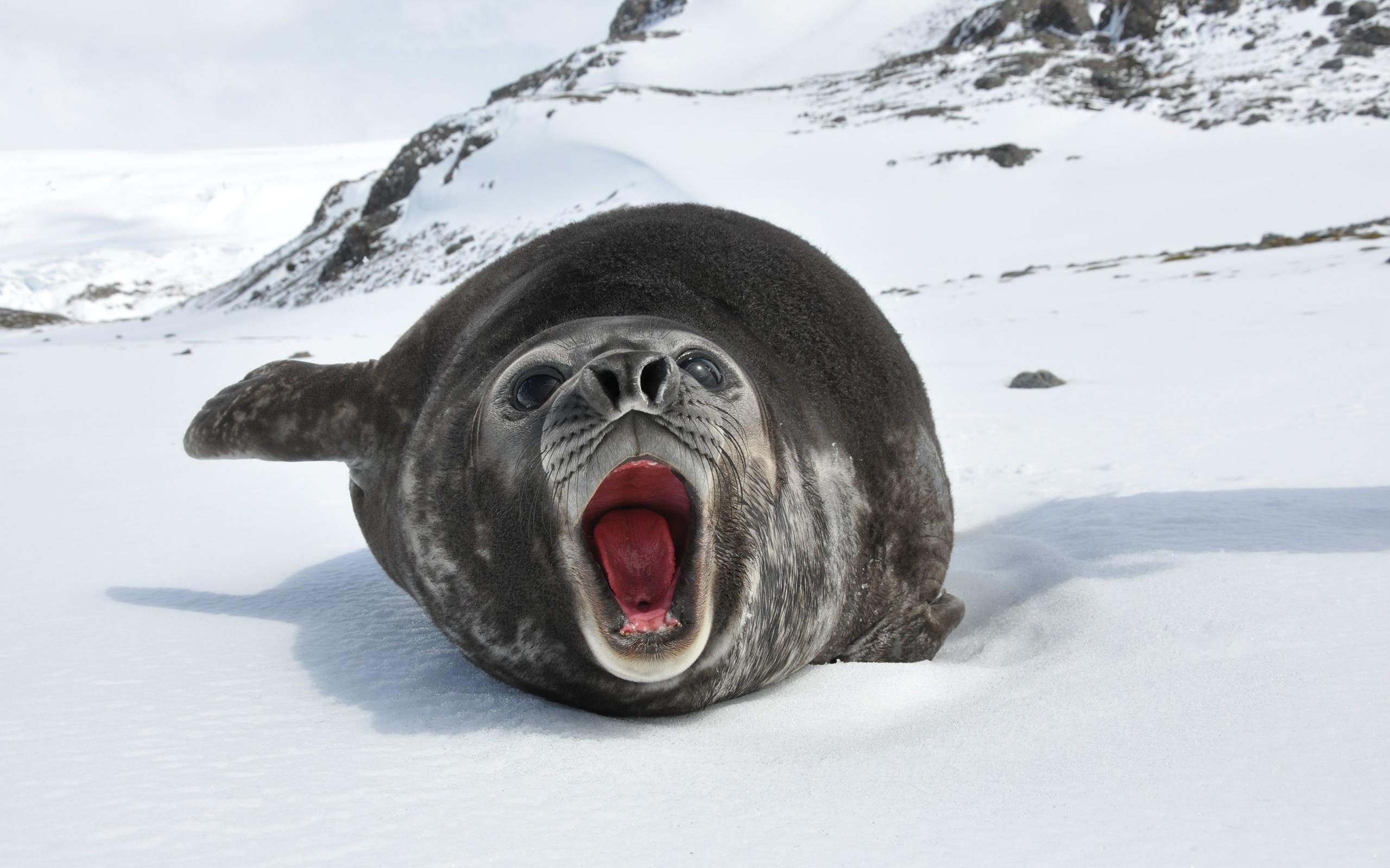 sea lion animal wallpaper background 52668