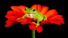 Frog Computer Wallpaper 50798