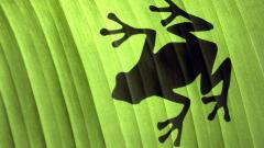 Frog Shadow Wallpaper 50804