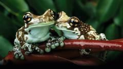 Frog Wallpaper 50805