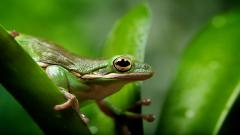 Frog Wallpaper Pictures 50799
