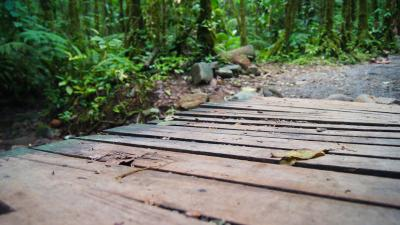 Tenorio Volcano Rain Forest Bridge Wallpaper 55591