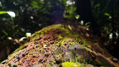 Tenorio Volcano Rain Forest Tree Bark Wallpaper 55590