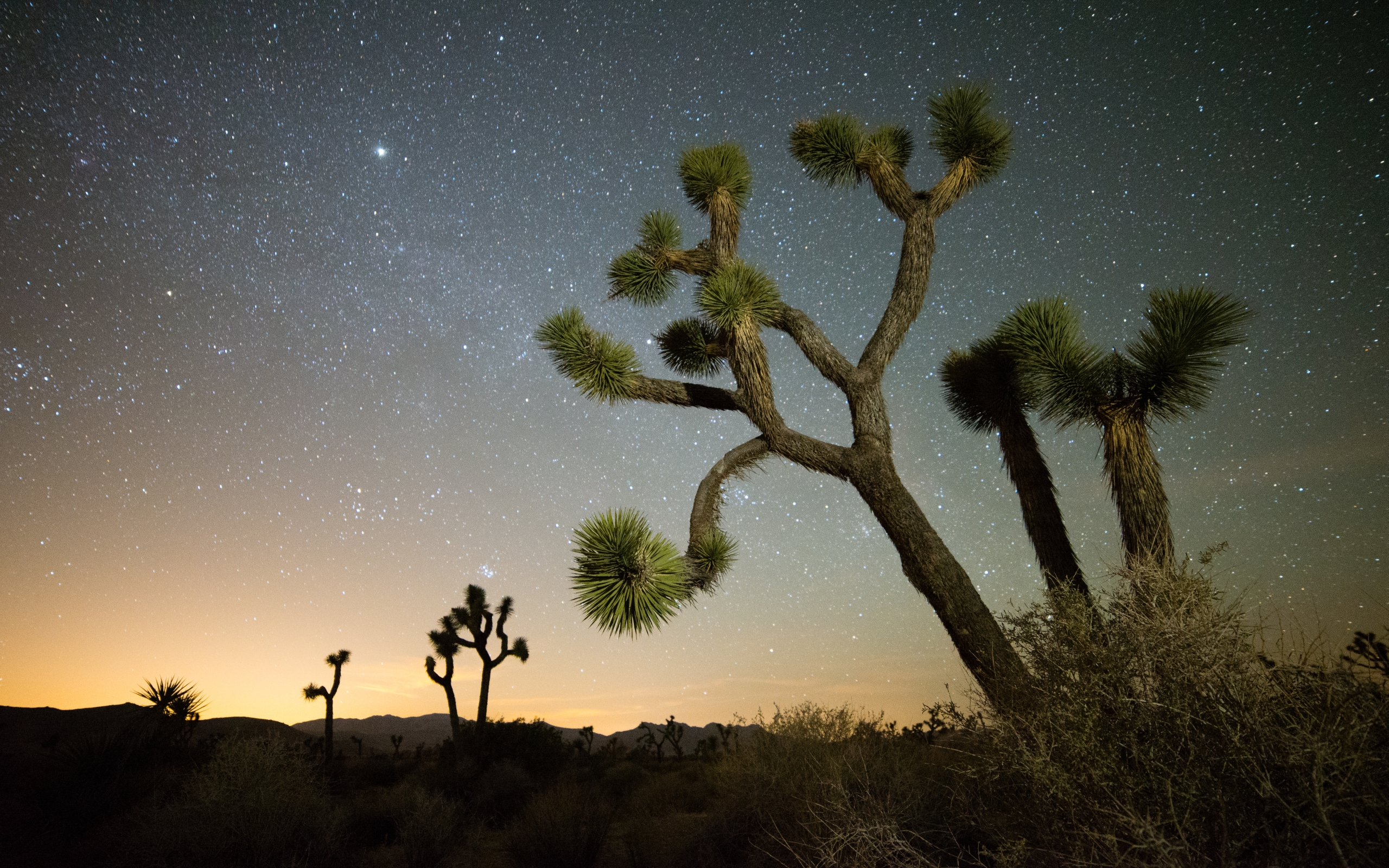 joshua tree night wallpaper background 53122