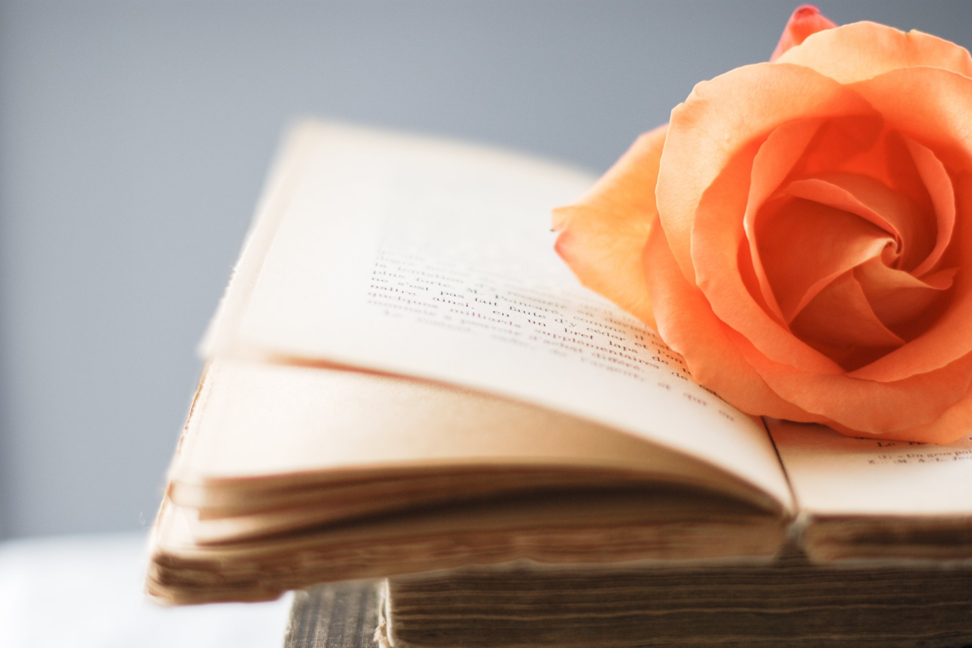 orange rose on book pages wallpaper 49792
