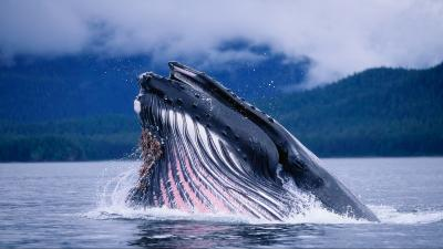 Whale Wide HD Wallpaper 52954