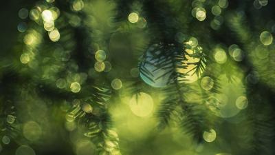 Spruce Blur Wide Wallpaper 52043