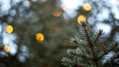 Spruce Bokeh Wallpaper 52041