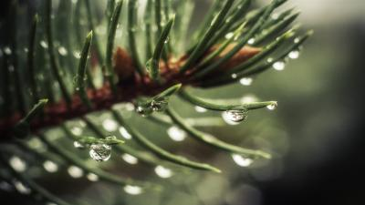 Spruce Up Close Wallpaper 52042