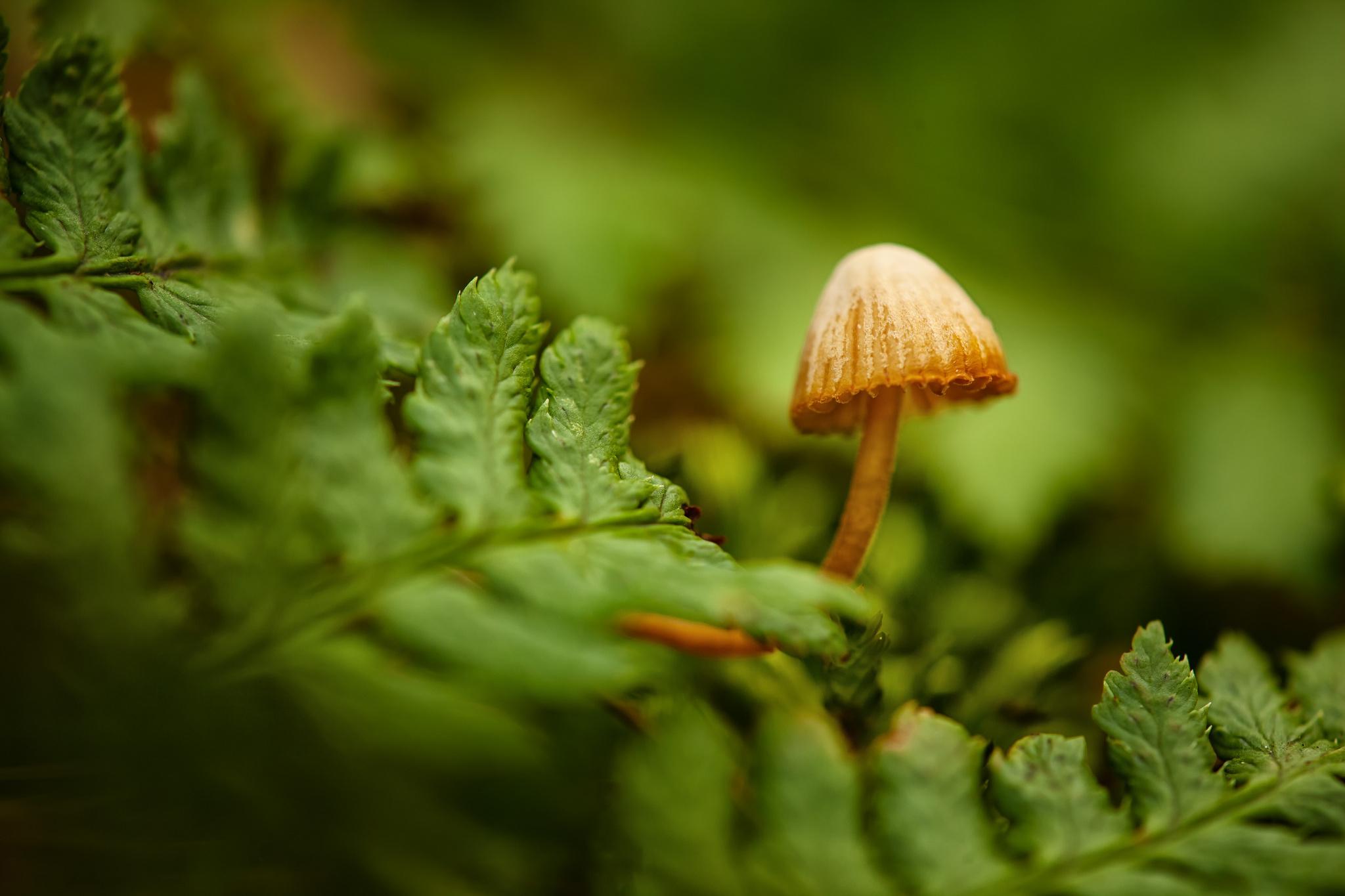 mushroom computer wallpaper 50980