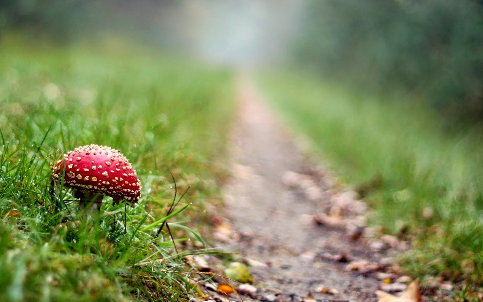 mushroom photography wallpaper 50990