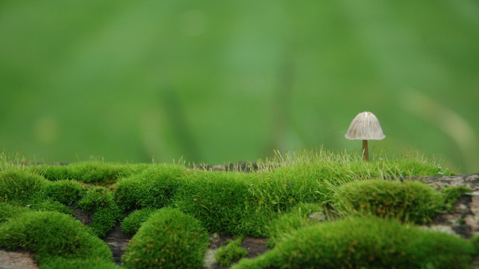 mushroom wallpaper pictures 50984