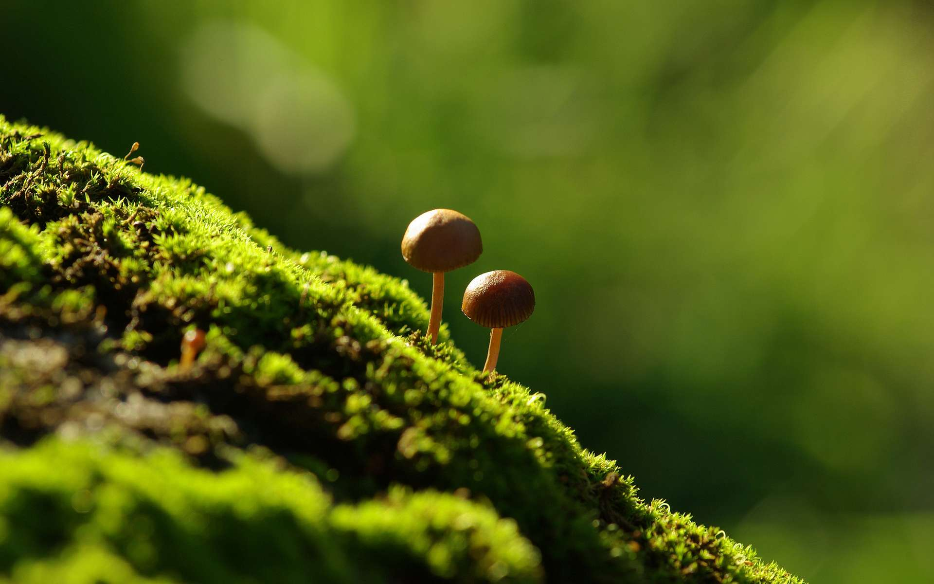 mushrooms desktop wallpaper 50979