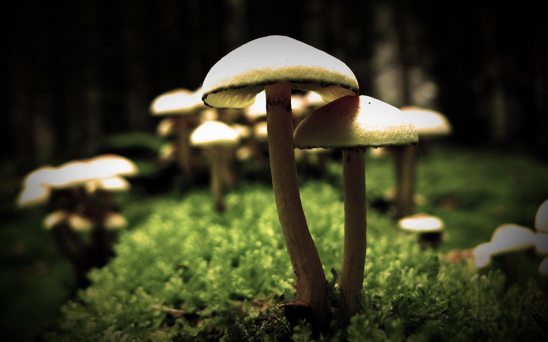 mushrooms desktop wallpaper 50986