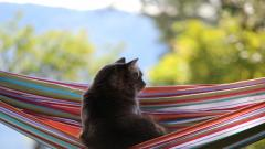 Cat In Hammock Wallpaper 49212