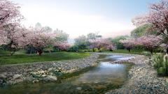 Japan Sakura Wallpaper 51329