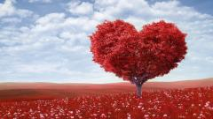 Love Tree Widescreen Wallpaper 50424