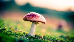 Red Mushroom HD Wallpaper 50983