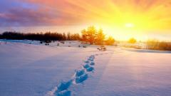 Winter Footprints Wallpaper 50183