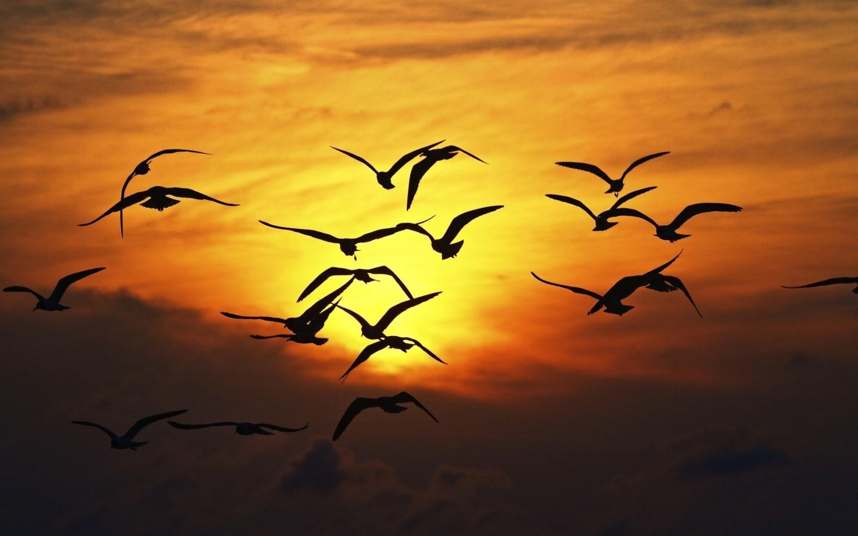birds silhouette sunset wallpaper 49053