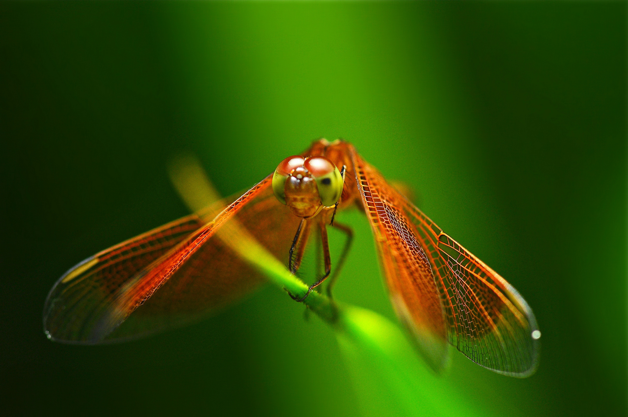 dragonfly wallpaper 49539