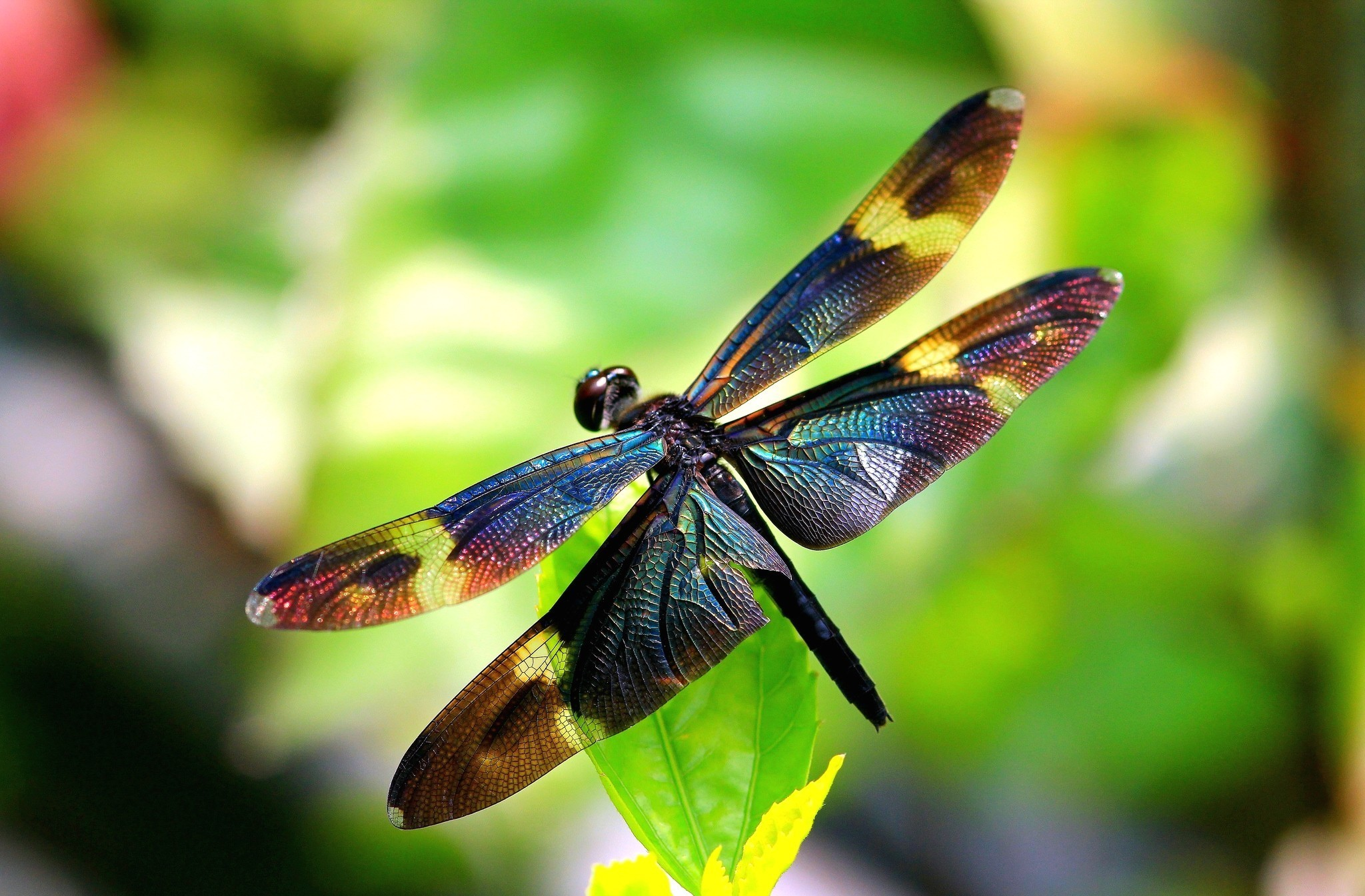 dragonfly wallpaper hd 49540