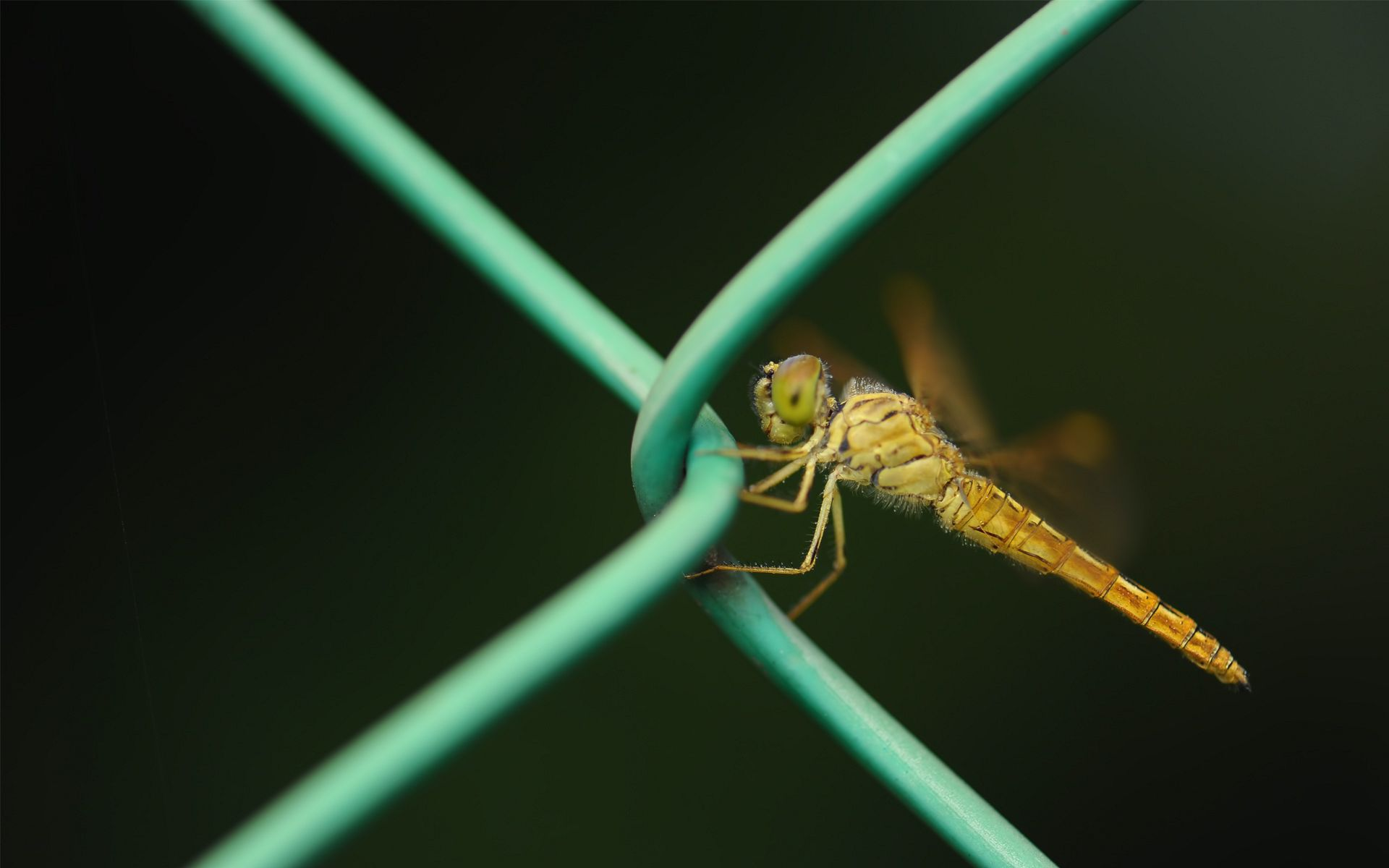dragonfly wallpaper pictures 49536