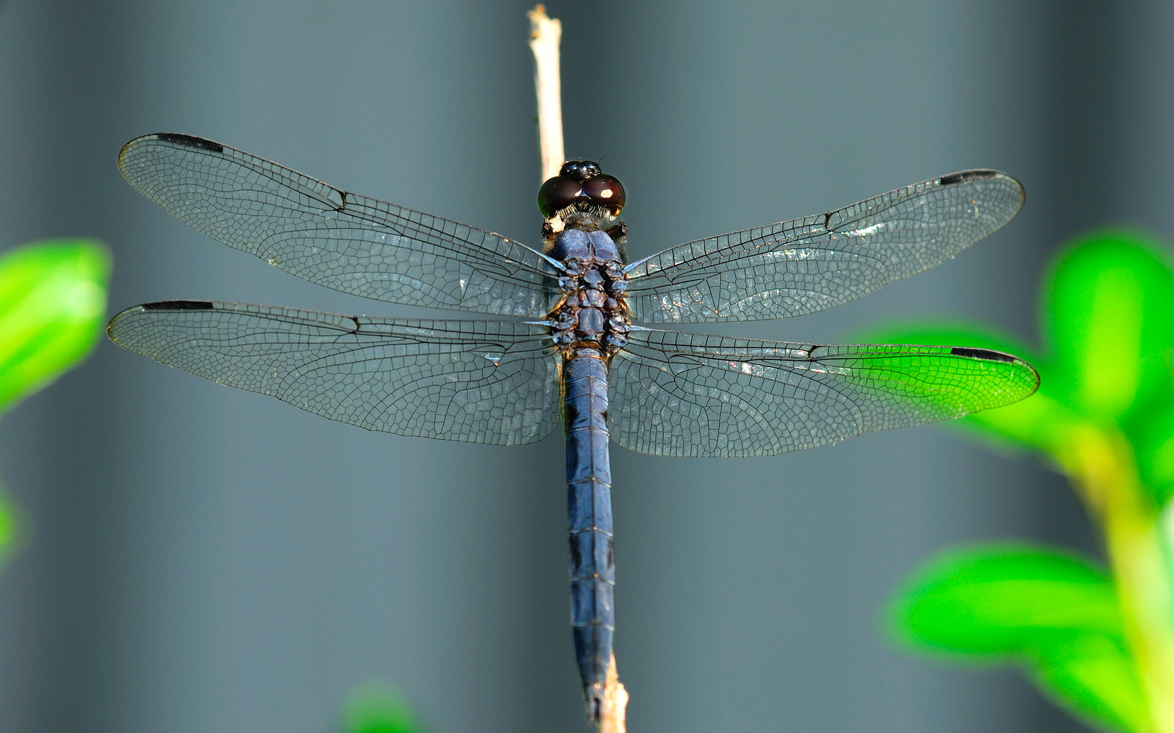 dragonfly wallpaper pictures 49549