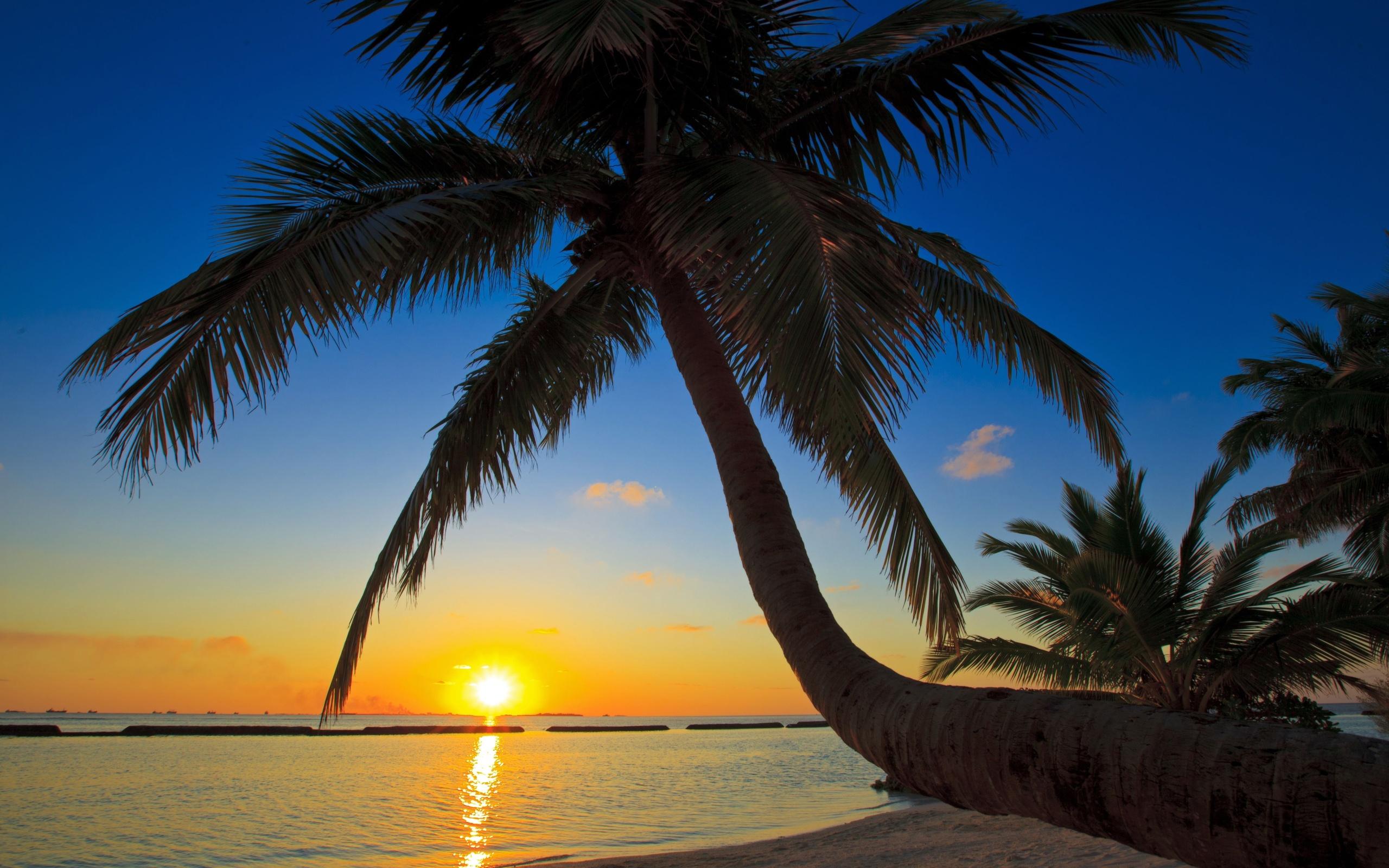 palm tree beach wallpaper 49772