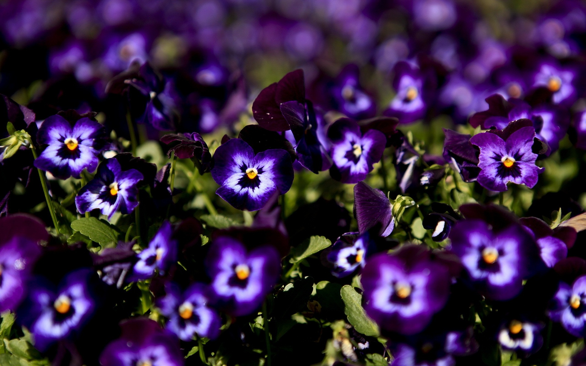 Floral Desktop Background Hd