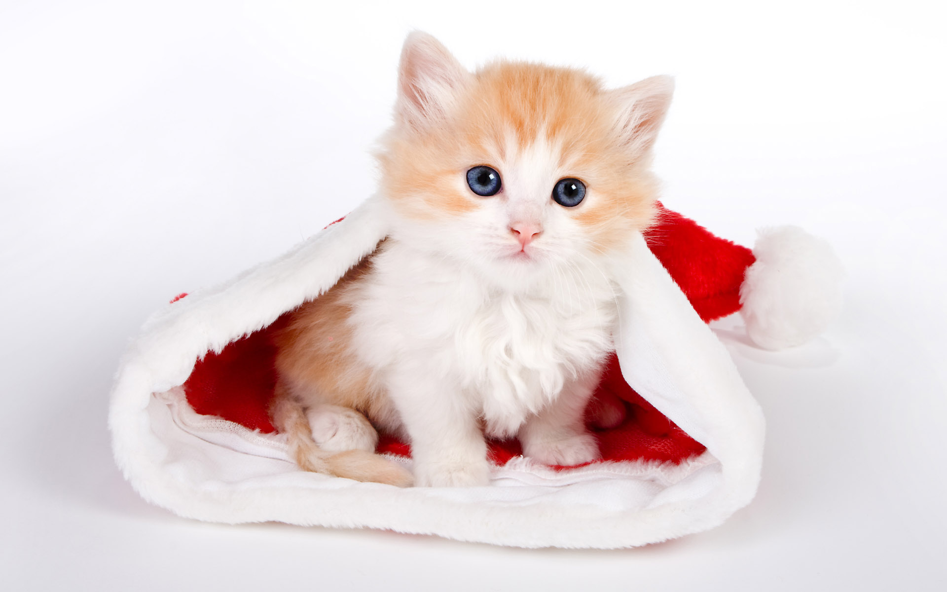 Santa Hat Cat Desktop Wallpaper 49846 1920x1200px