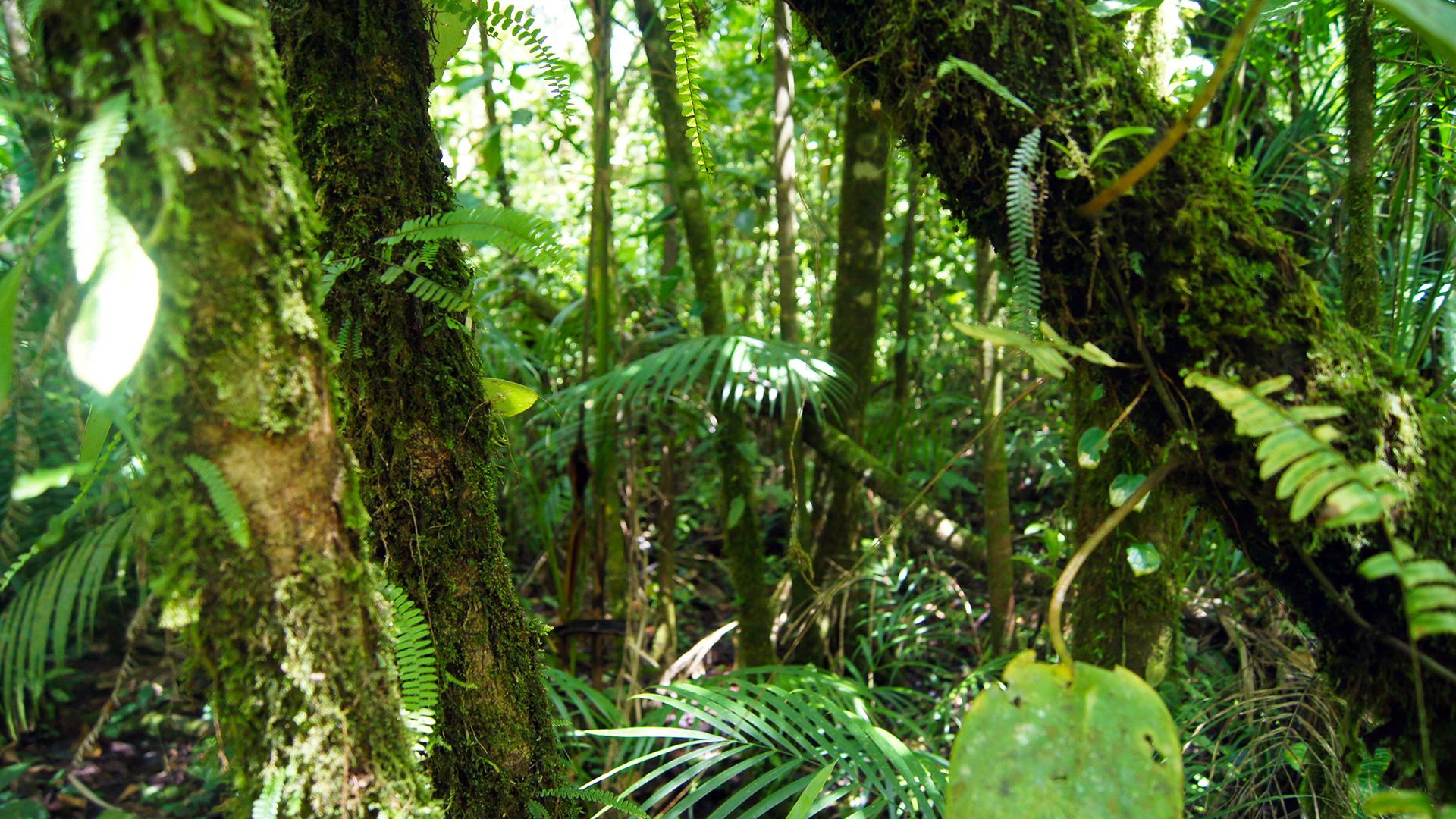 tenorio volcano rain forest 56092
