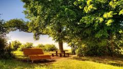Bench Wallpaper Background 49058