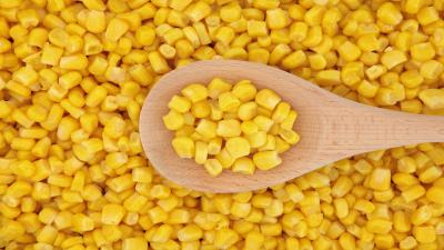 Corn Wallpaper Photos 58844