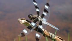 Dragonfly Animal Wallpaper Background 49534