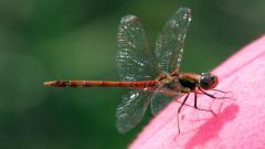 Dragonfly Computer Wallpaper 49546