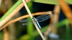 Dragonfly Computer Wallpaper 49548