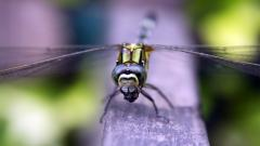 Dragonfly Desktop Wallpaper HD 49535