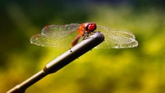 Dragonfly Wallpaper HD 49537