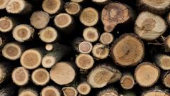 Firewood Wallpaper Background HD 49353