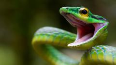 Green Snake Wide Wallpaper 49373