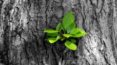 New Growth On Tree Bark Wallpaper 49761