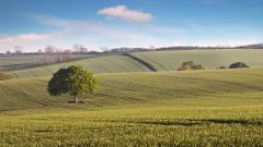 Oak Tree Countryside Wallpaper 49755