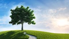Oak Tree Desktop Wallpaper HD 49757