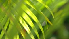 Palm Leaf Desktop Wallpaper 49766