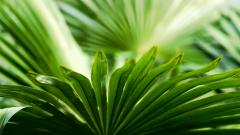 Palm Leaf Desktop Wallpaper HD 49765