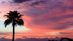 Palm Tree Silhouette Wallpaper Pictures 49768