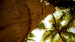 Palm Tree Trunk Wallpaper Background 49773